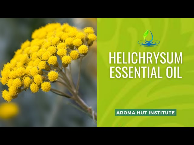 Helichrysum Essential Oil - How To Use