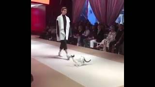 В Стамбуле кошка приняла участие в модном показе