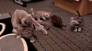 На это стоит посмотреть - как кошка ухаживает за своими котятами.