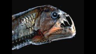 Top-10 Самых невероятных существ на Земле!