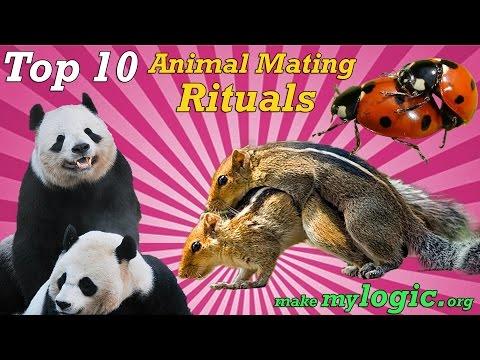 Top 10 Crazy Animal Mating Rituals