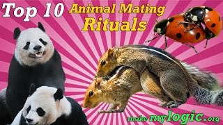 Top 10 Crazy Animal Mating Rituals