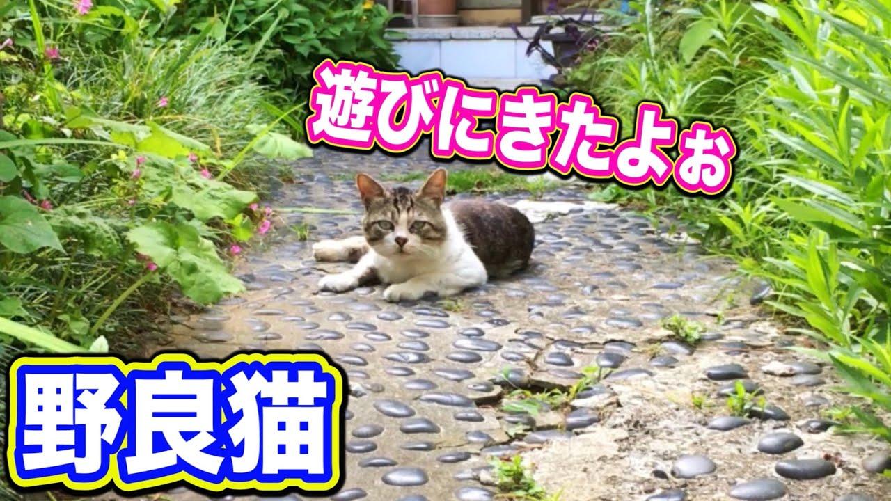 野良猫が我が家の様に帰ってくる Kitten Cat Japanese traditional house