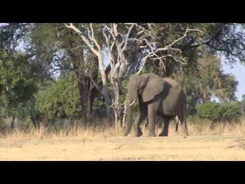 Zambia Safari 2014