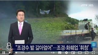 "[JTV 8 뉴스] ""조경수 밭 갈아엎어&qu…"