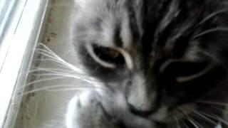 Кошка умывается