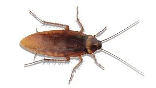 Hamam Böcekli Eşek Şakası