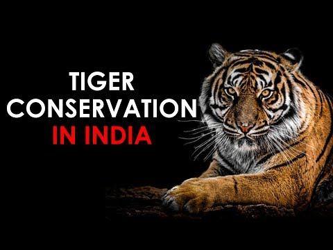 Tiger Conservation in India - Quick Revision for UPSC || IAS || Prelims