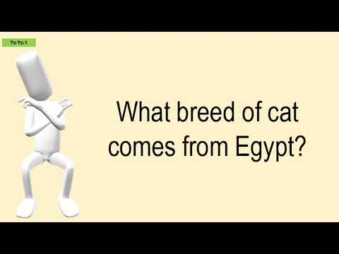 What Breed Of Cat Comes From Egypt?