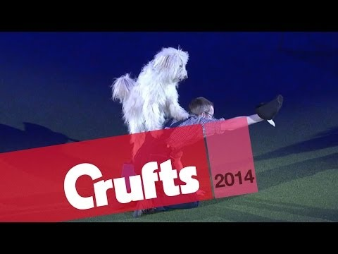 Heelwork to Music | Freestyle International | 1st Place | Crufts 2014