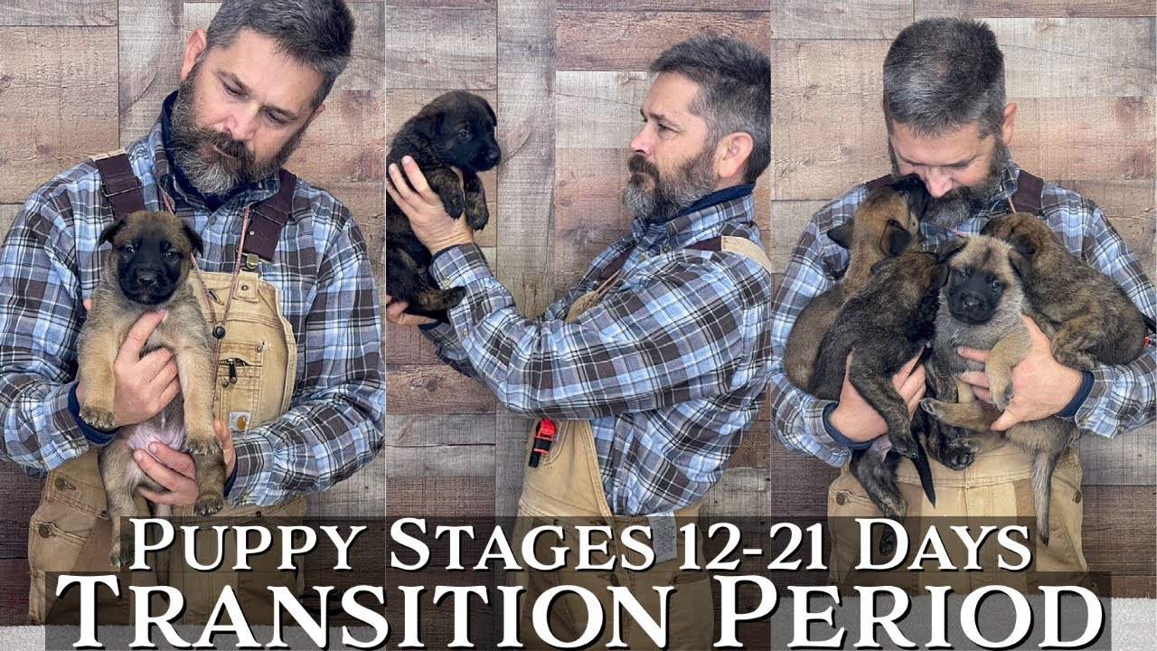 Puppy Developmental Stages: Episode 2 | Transition Period (12-21 Days)