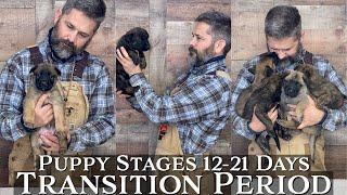 Puppy Developmental Stages: Episode 2 | Transition Period (1221 Days)