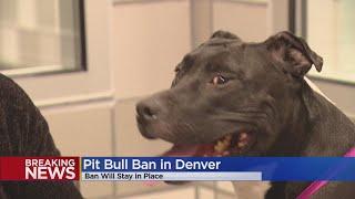 Denver City Council Can't Overturn Mayor's Veto Of Pit Bull Ban Reversal