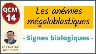 l anemie megaloblastique dermatite canina