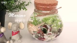 펀앤굿 수경재배 반려식물 행운목 마리모 어항 DIY 선…