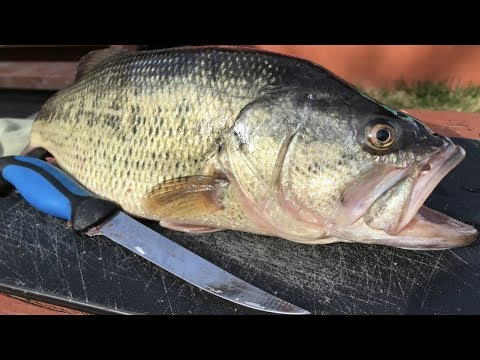 How To: Fillet A Bass Like A Pro - Boneless Bass No Gutting - Step By Step