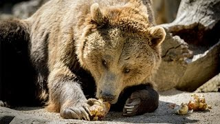 The Markets Are Going to Be Mauled by the Bear, David Stockman Says
