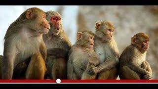 قصة حياة القرود I عالم الحيوان