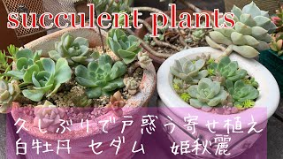 Succurents Plant 寄せ植え修正/久しぶりの寄せ植え作業に四苦八苦/セダム/姫秋麗/白牡丹/ガーデニング