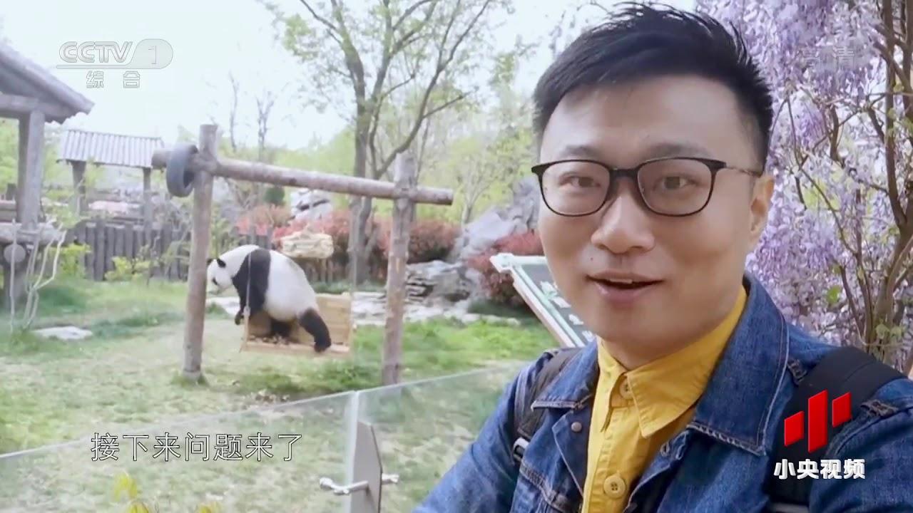 大熊猫有六根指头?| CCTV中文国际