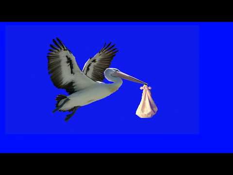 Stork with Baby | Bird with Baby  Green Screen cigüeña | Christian Stock Footage