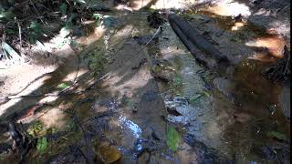 Small stream in Amboro National Park