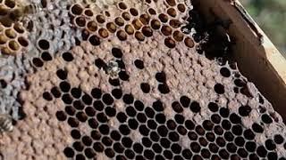 Μελισσοκομικές εργασίες, επιθεώρηση. Το θαύμα της φύσης.