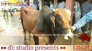 088   TB Eid ul Azha   Median Size Bulls   Gabtoli Haat   Dhaka Dairies   ZbGH 2019