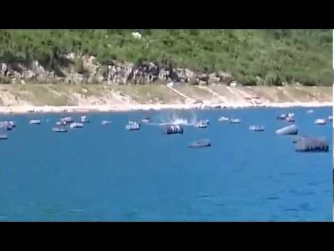 Delfin u Neumu / Dolphin in Neum