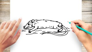 How to Draw Opossum Step by Step for Kids