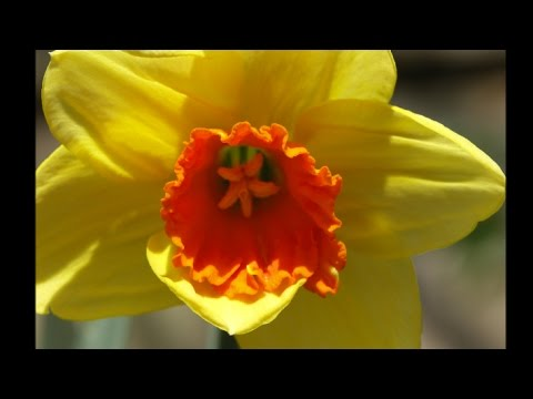 Spring Flowers In England Youtube