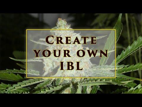 Cannabis Breeding Methods , Line Breeding with Khalifa Genetics