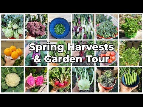 The California Garden – Spring Harvests, March 2021 Garden Tour, Gardening Tips & More!