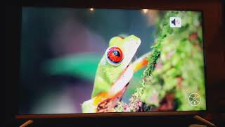 Panasonic 109cm 43 inch Ultra HD 4K LED TV TH 43EX480DX hdr contrast review