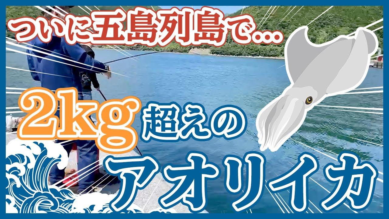 【アオリイカ】五島列島でエギングを初めて2年目...ついに2kg超えのアオリイカを釣りました!!!/その日に捌いて、家族で絶品イカ料理を楽しみます!!!