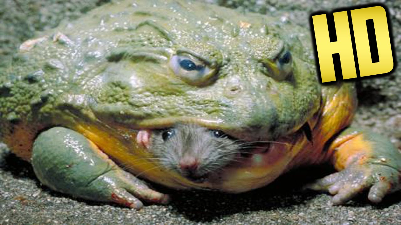 What To Do When Your Dog Eats A Frog