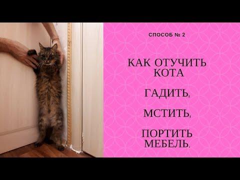 Вопрос: Как отучить кота гадить в доме в связи с холодами на улице (см.)?