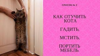 Как отучить кота гадить,мстить,портить мебель  Способ 2