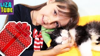 Будет ли лабиринт для котов? Подарки Лизе от Сюрприз БОКС Гаджеты и вкусняшки