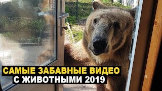Самые забавные видео с животными 2019