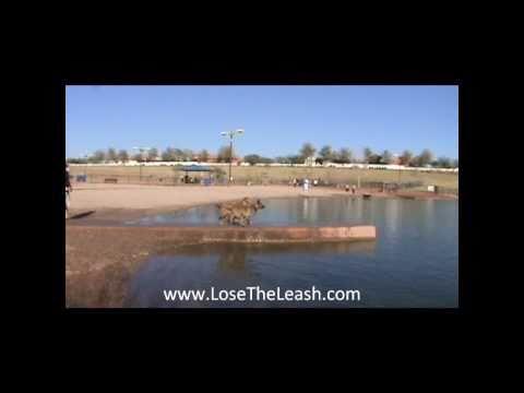 LOSE THE LEASH Phoenix  Dog Training at Cosmo Park Gilbert Arizona