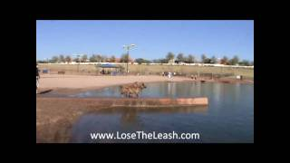 Lose The Leash Phoenix  Dog Training At Cosmo Park Gilbert Arizona