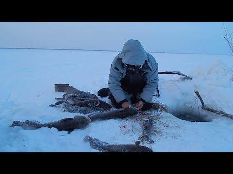 Рыбалка на малых реках Сибири. Ловля сетями зимой подо льдом