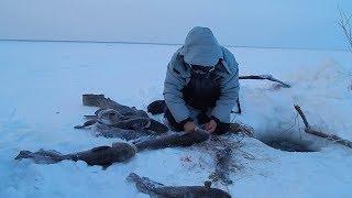 Рыбалка на малых реках Сибири Ловля сетями зимой подо льдом