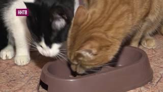 Слепые котята, о которых мы рассказывали в программе «Можно мне с тобой», обрели хозяина
