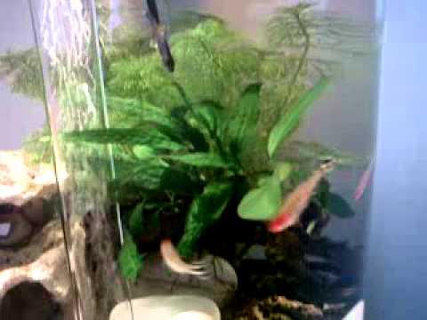 Biorb Biube Fish Tank Heavily Planted