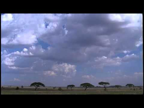 Africa Land Of The Sun AFRICA: SAVANNA HOMECOMING