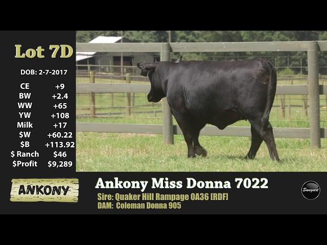 Ankony Lot 7D