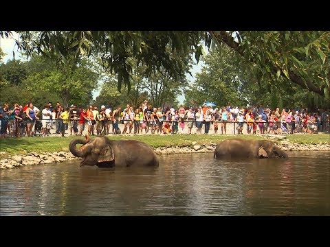 African Lion Safari - Elephant Swim