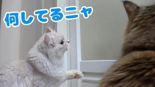 飼い主が入浴中の猫の様子